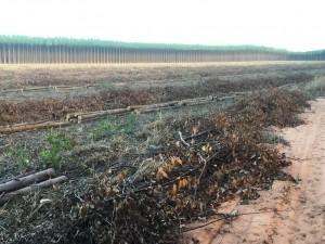 Compra lenha eucalipto
