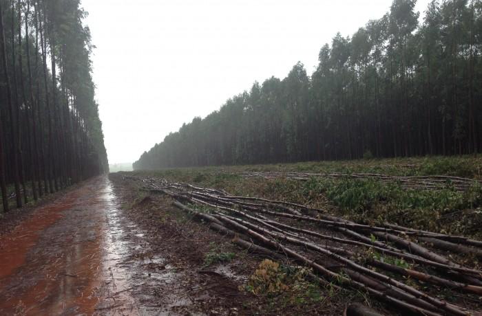 Colheita Florestal