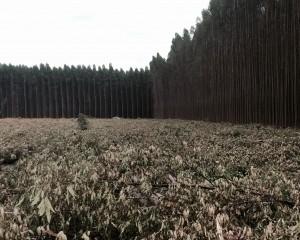 Zigomar Floresta